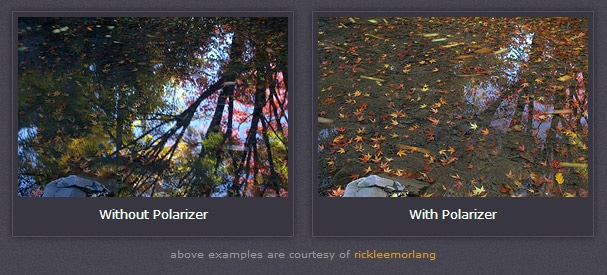 With and Without a Polarizer