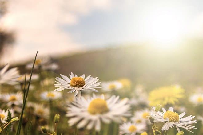 25 Beautiful Photos of Flowers