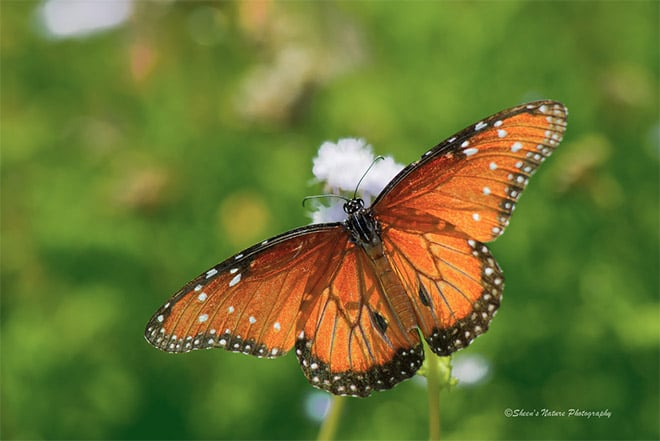 How to Create Beautiful Bokeh in Nature Photography