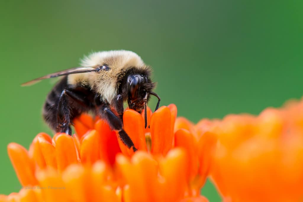 Bumbling on the Orange...