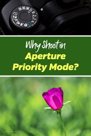 Why Shoot in Aperture Priority Mode?