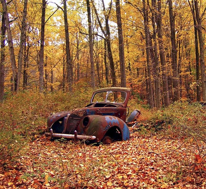 Autumn Grunge