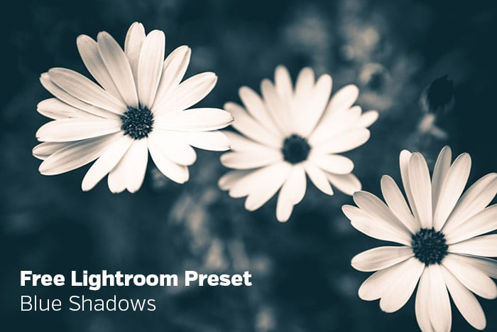 Free Lightroom Preset: Blue Shadows