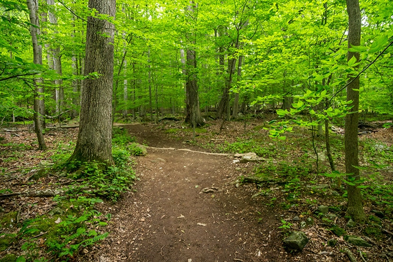 Photographing Catoctin Mountain Park and Cunningham Falls State Park (Maryland)