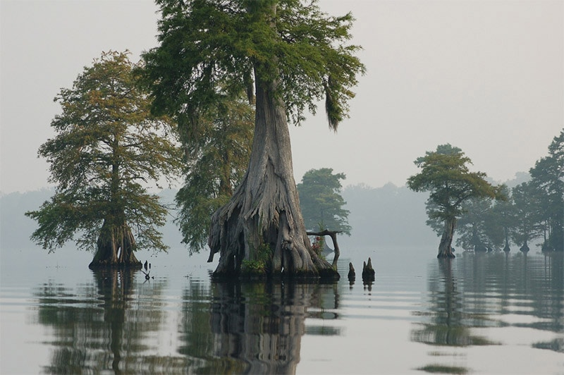 10 of the Best Places in the U.S. to Photograph Swamps