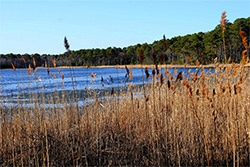 Assawoman Bay State Wildlife Area