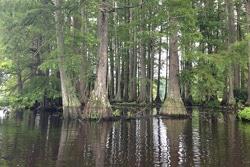 Trapp Pond