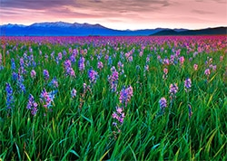 Camas Prairie Centennial Marsh Wildlife Management Area