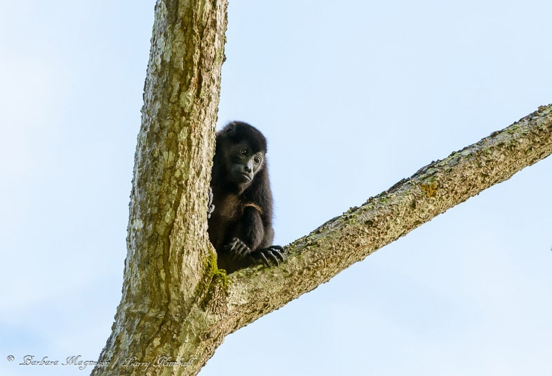 Amazing Wildlife and Nature Photos from Costa Rica