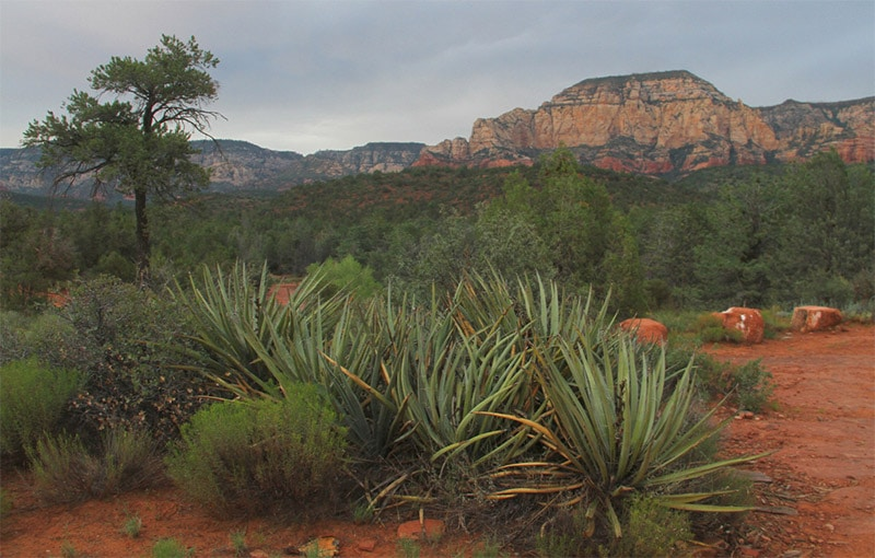 Red Rock State Park, Sedona (Arizona)