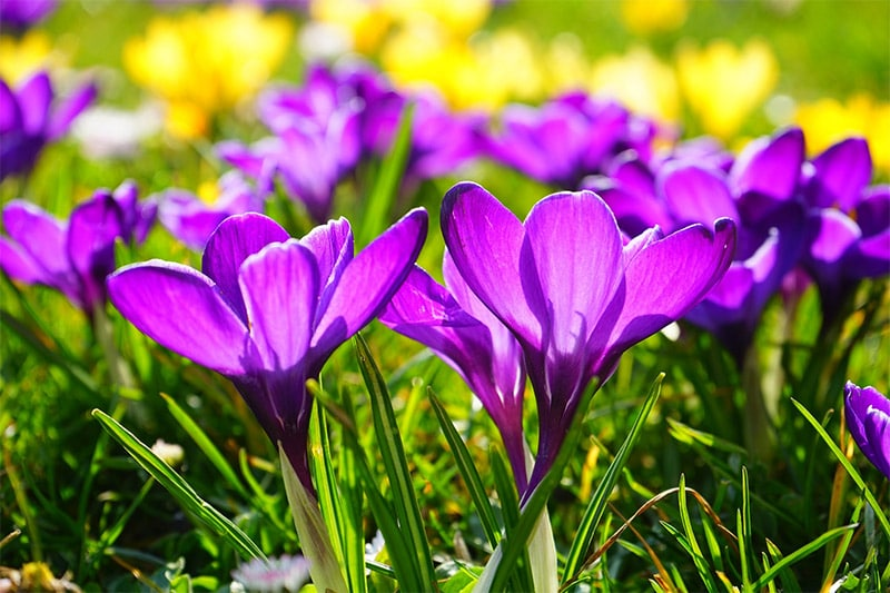 Spring Flower Photography
