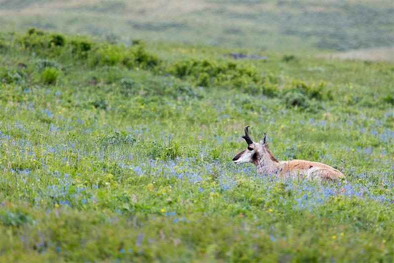Spring Wildlife Photography