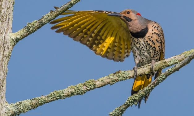 """Bird Photography: How to """"Get the Shot"""""""