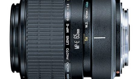 Reviews of the Best Macro Lenses for Canon DSLRs