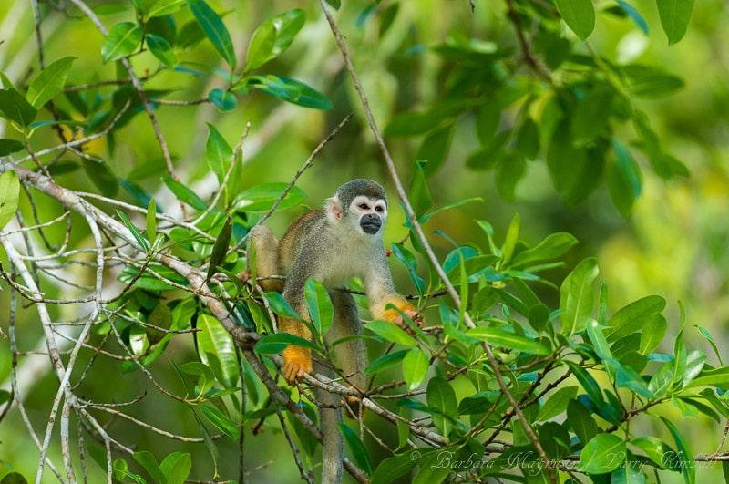 Beautiful Nature and Wildlife Photos from Ecuador