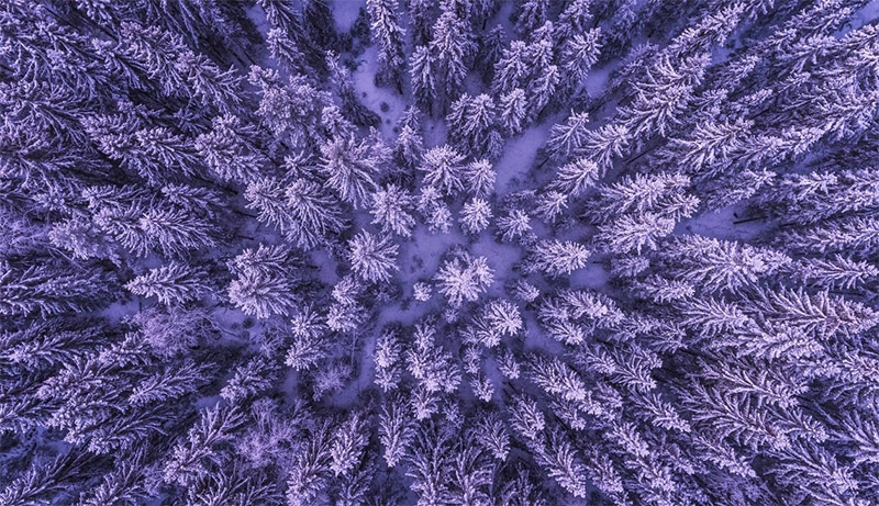 25 Intriguing Abstract Nature Photos