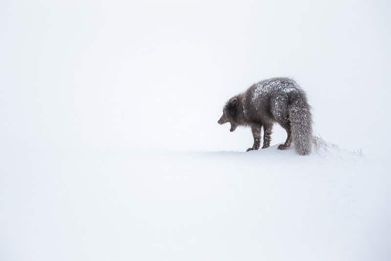 Interview with Polar Photographer Joshua Holko