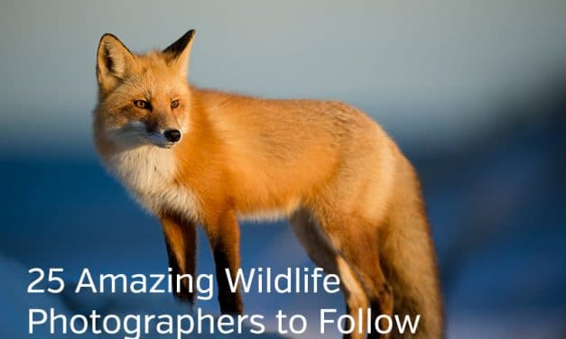 Chasing Wildlife: Photographers, Tips, Reasons, and Locations