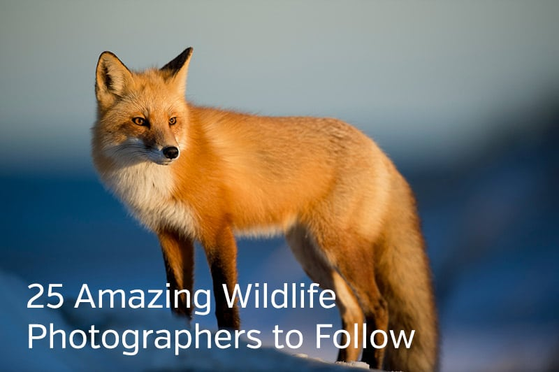 Wildlife Photographers to Follow