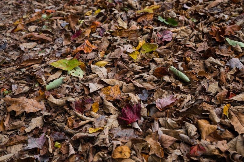 Autumn Boost
