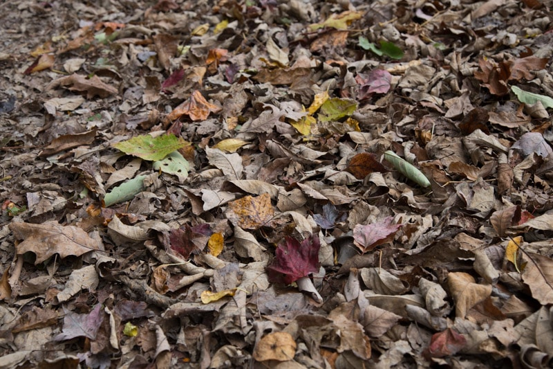 Dull Autumn Colors