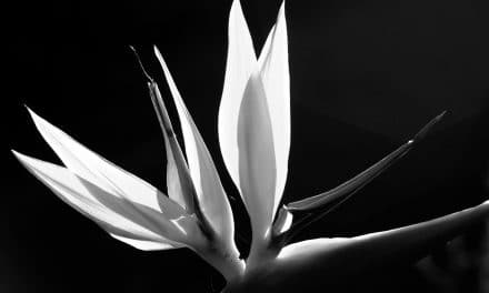 Monochrome in Nature Photography