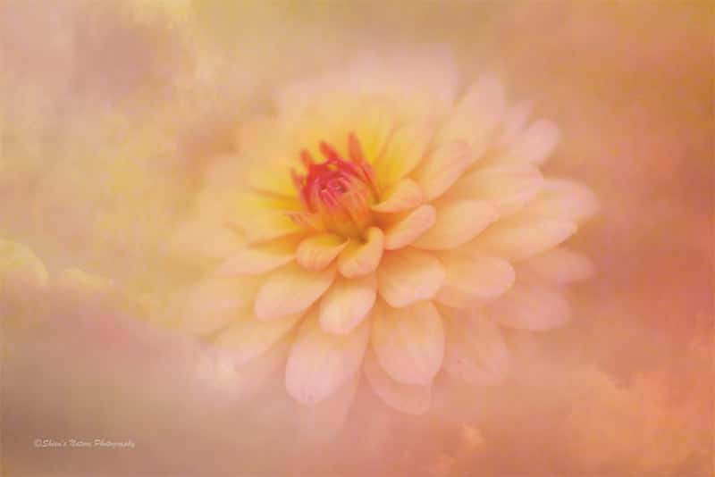 Amping Up Your Artistry in Your Photography ~ Intentionally
