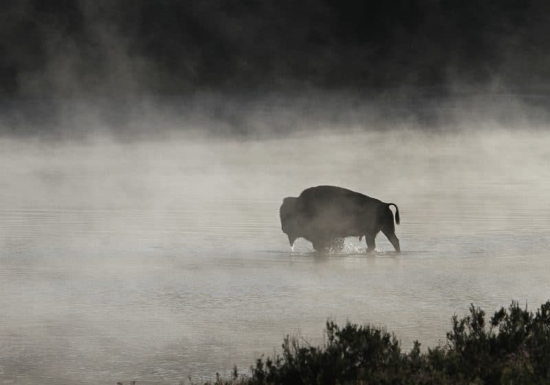 Wildlife in Landscape Photography