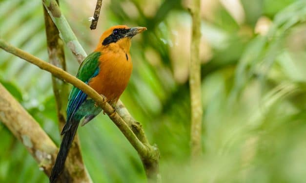 Panama is More Than a Canal: Beautiful Wildlife and Landscape Photos from Panama