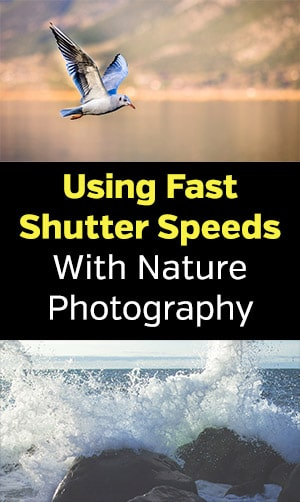 Using Fast Shutter Speeds with Nature Photography