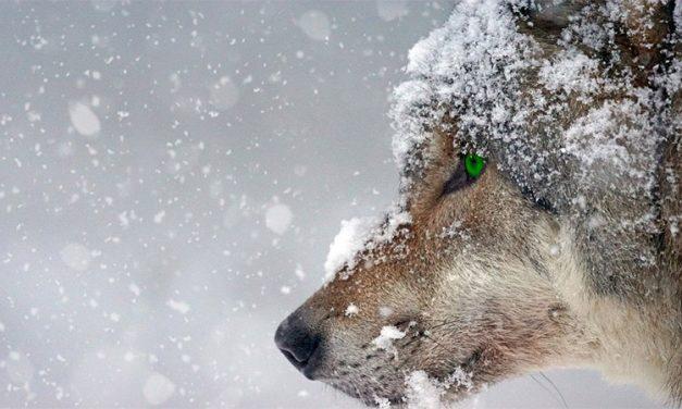 Best (and Best Bargain) Wildlife Lenses