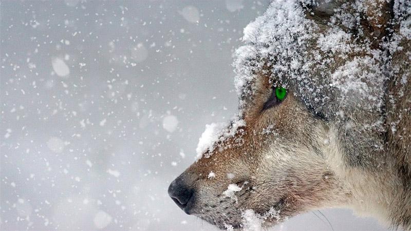 Best Wildlife Photography Lenses
