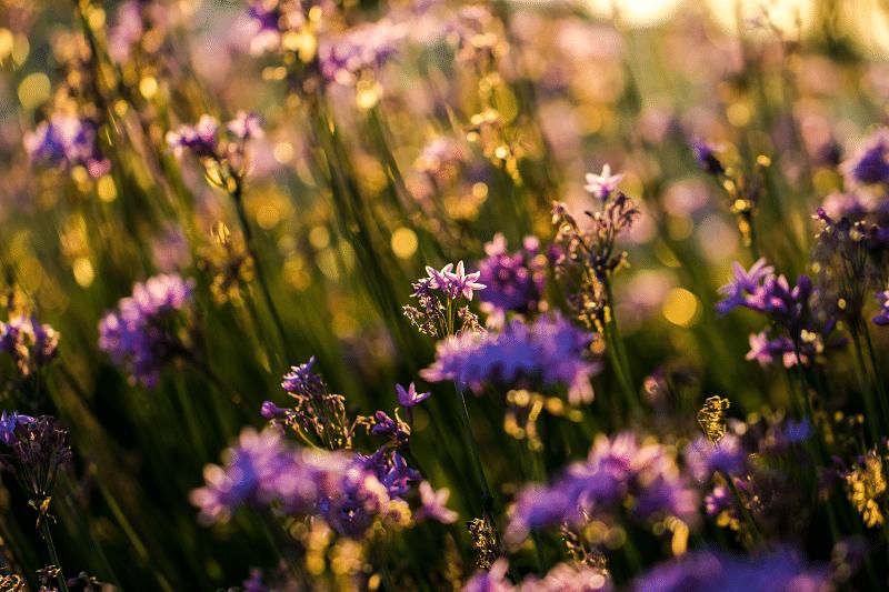 Capturing Beautiful Golden Hour Photos