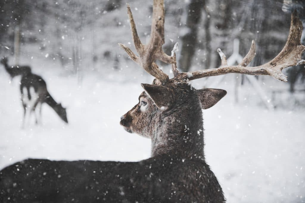 Tips for Shooting Better in Winter Weather