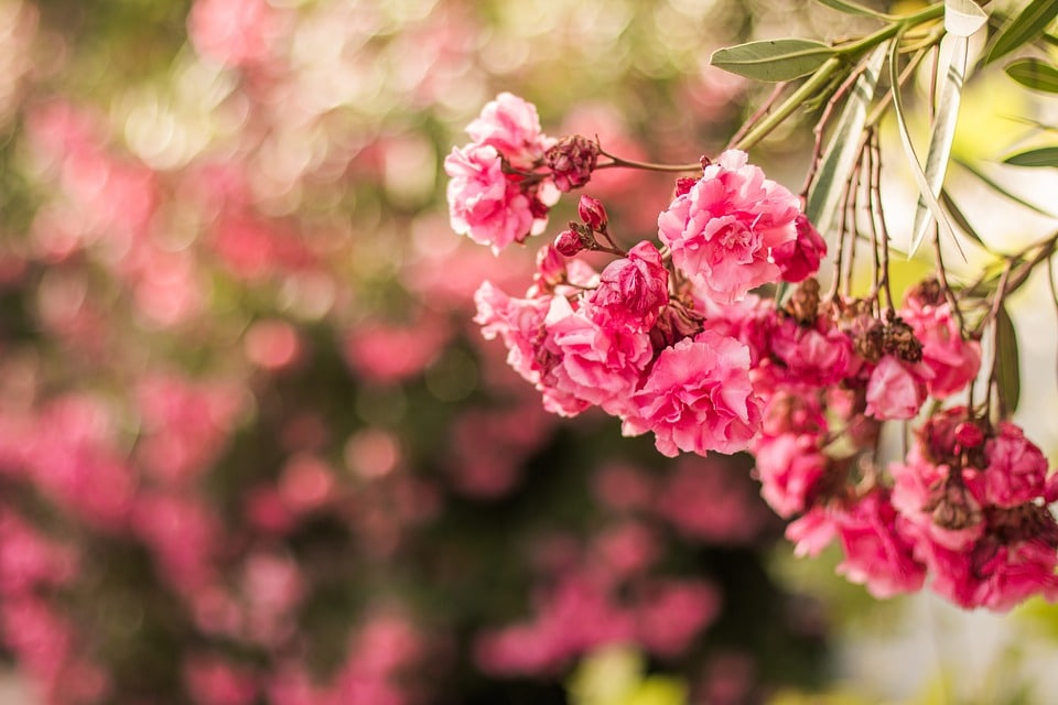 Tips for Generating Beautiful Bokeh