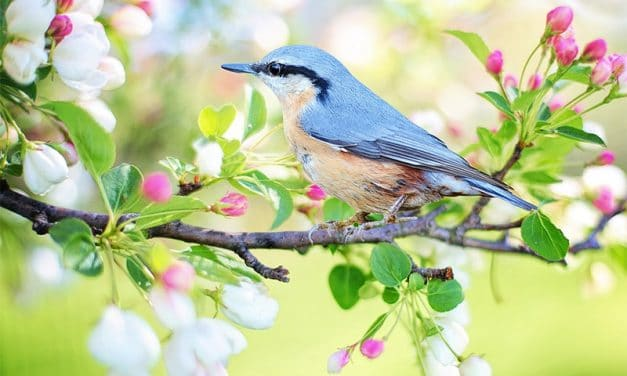 40 Incredible Spring Photos for Your Inspiration