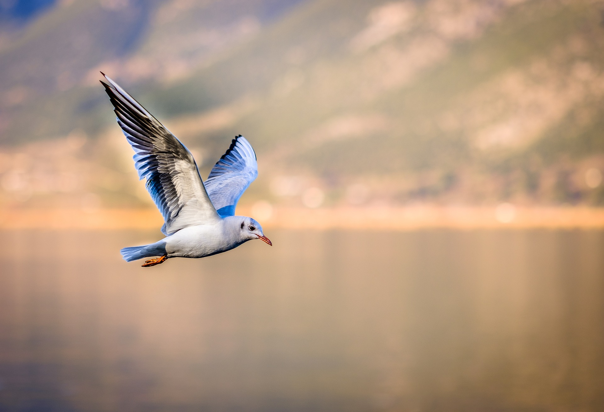 6 Steps To Photographing Birds Successfully