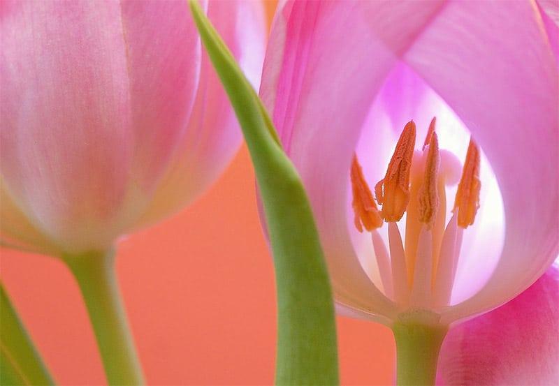 Photo by Soorelis / Pixabay license