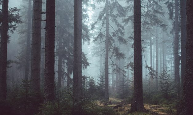 30 Beautiful Photos Taken in Mist and Fog