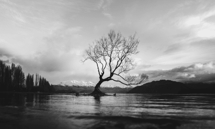 Tips for Photographing Trees