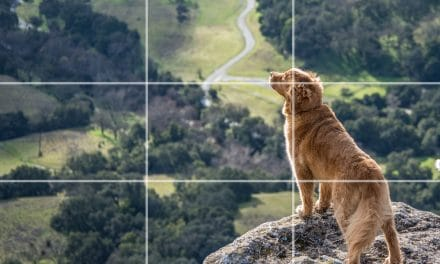 Why You Should Know the Rule of Thirds for Better Photos